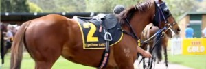 Races Tuesday 12th February @ Lismore Turf Club | North Lismore | New South Wales | Australia